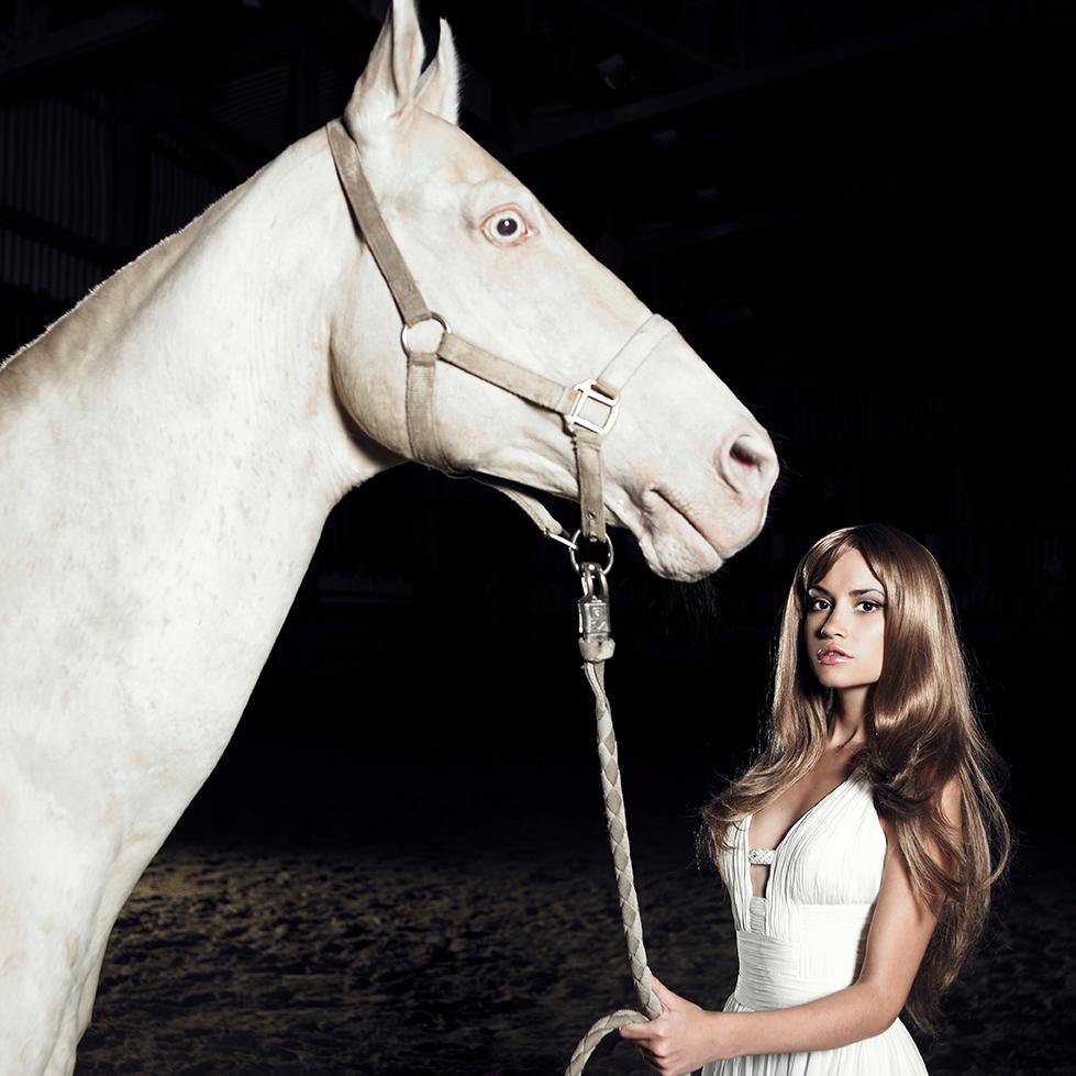 Addequin-philhippos-paard