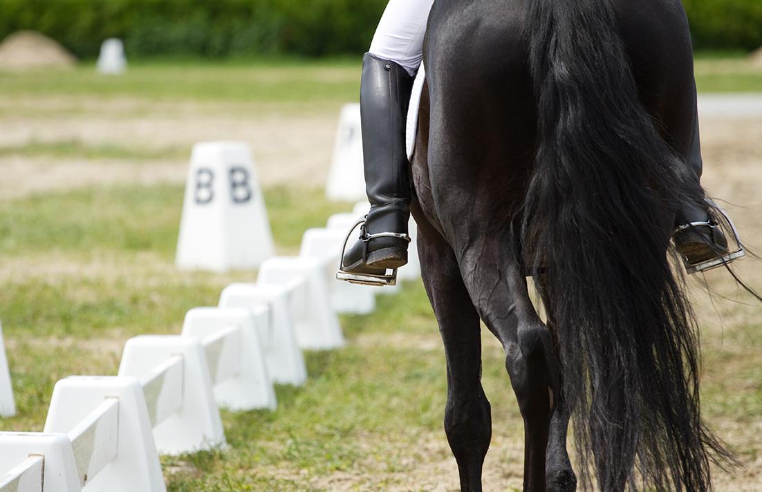 Paard-Addequine-Slider-1